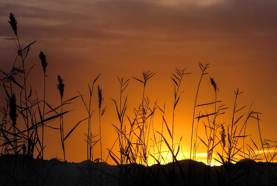 Sunrise Photograph - Winter Sunrise by Tammy Espino