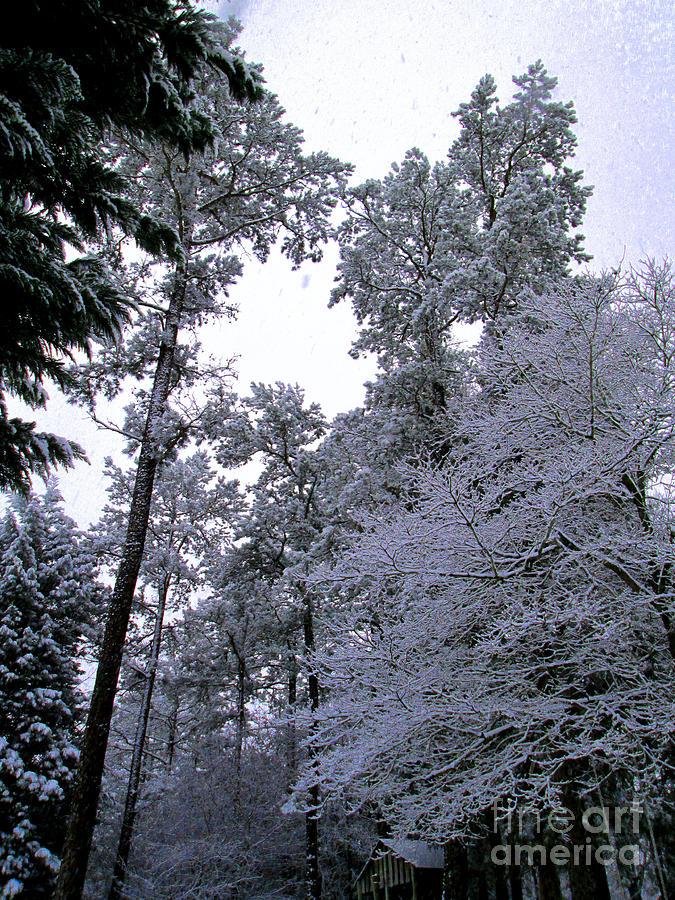 Winter Surprise Photograph