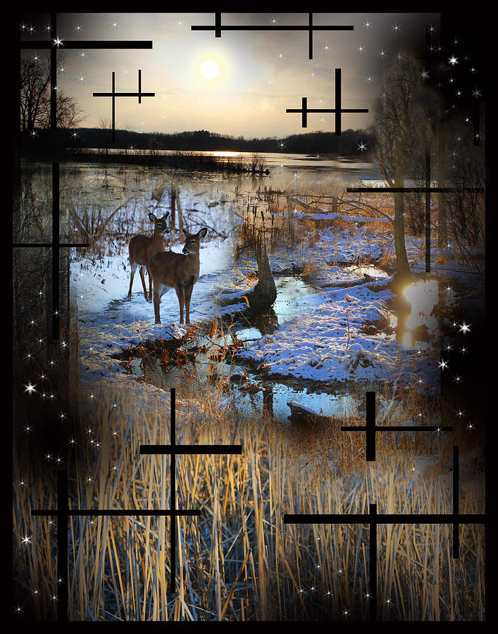 Winter Swamp Evening Photograph  - Winter Swamp Evening Fine Art Print