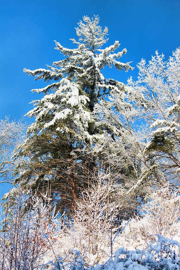 Winter Time Photograph  - Winter Time Fine Art Print