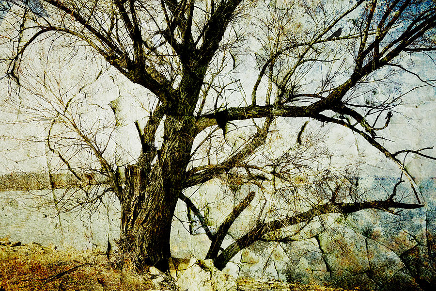 Winter Tree At The  Lake Shore  Photograph  - Winter Tree At The  Lake Shore  Fine Art Print