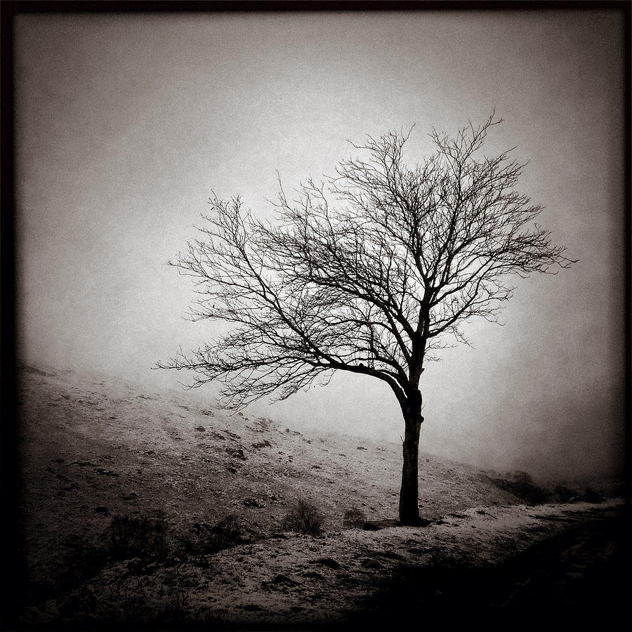 Winter Tree Photograph  - Winter Tree Fine Art Print