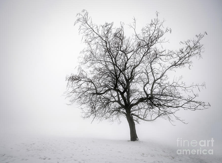 Winter Tree In Fog Photograph