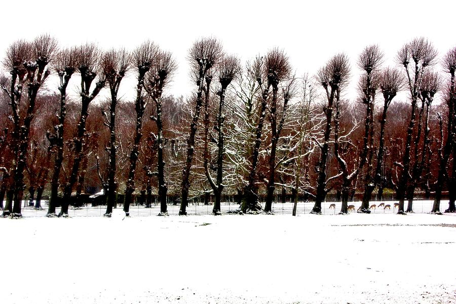Winter Tree Line 2 Photograph  - Winter Tree Line 2 Fine Art Print