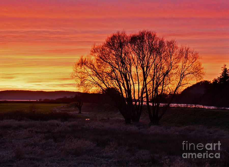 Landscape Photograph - Winter Tree With Red Sky by Valerie Garner