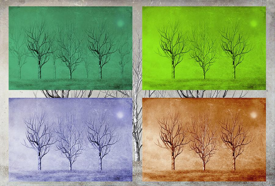 Winter Trees  Digital Art  - Winter Trees  Fine Art Print