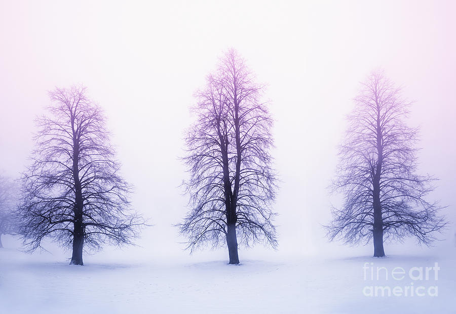 Winter Trees In Fog At Sunrise Photograph