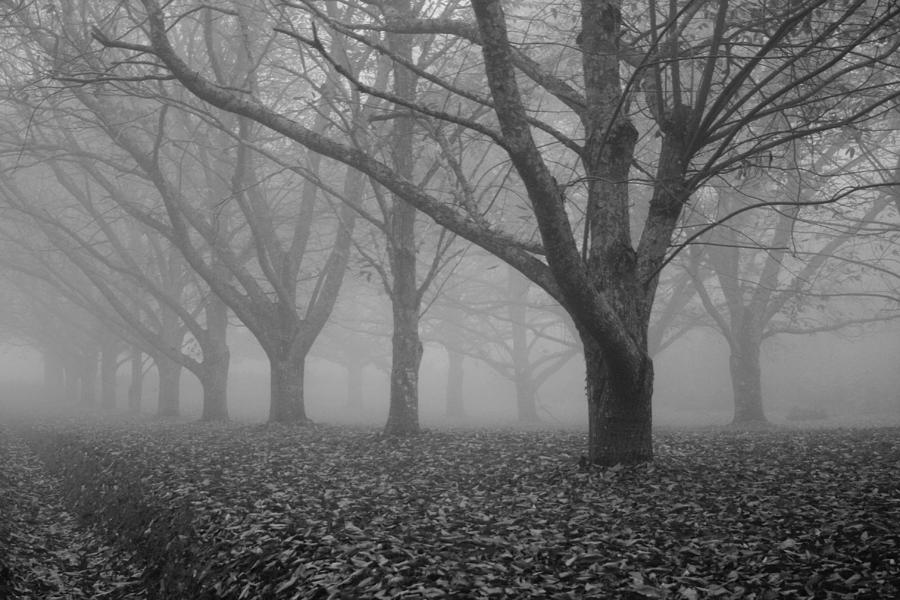 Winter Trees In The Mist Photograph