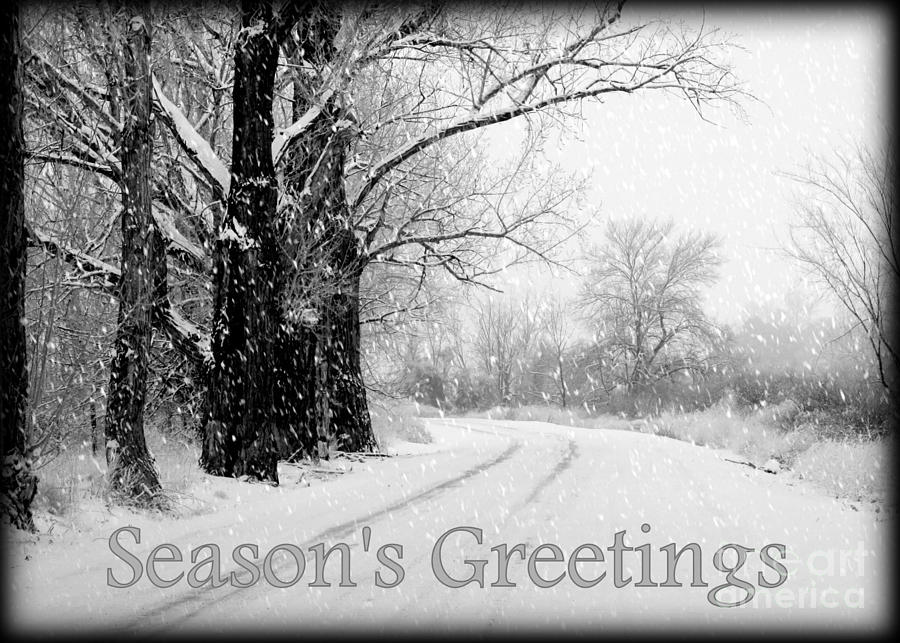 Winter White Seasons Greeting Card Photograph