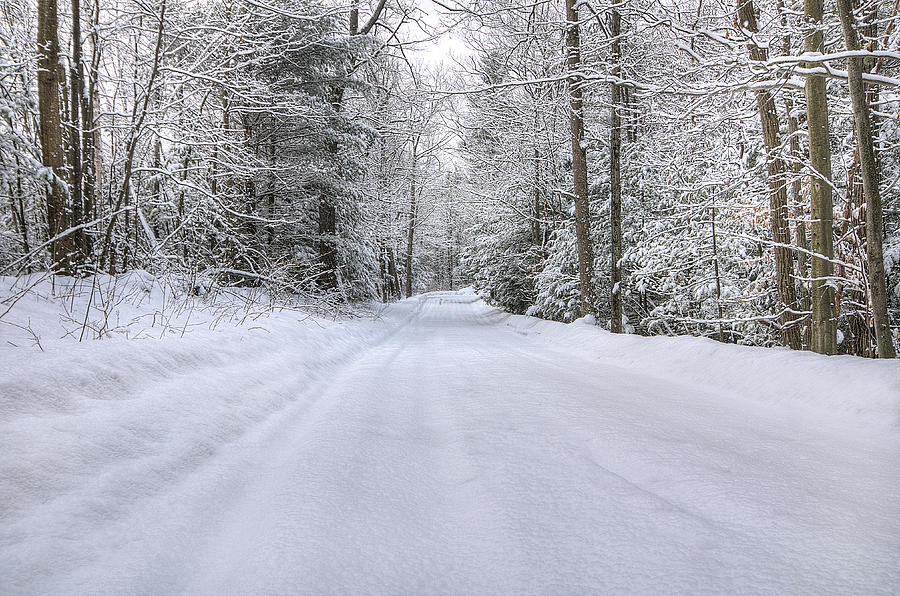 Winter Photograph - Winter Wonderland by Donna Doherty