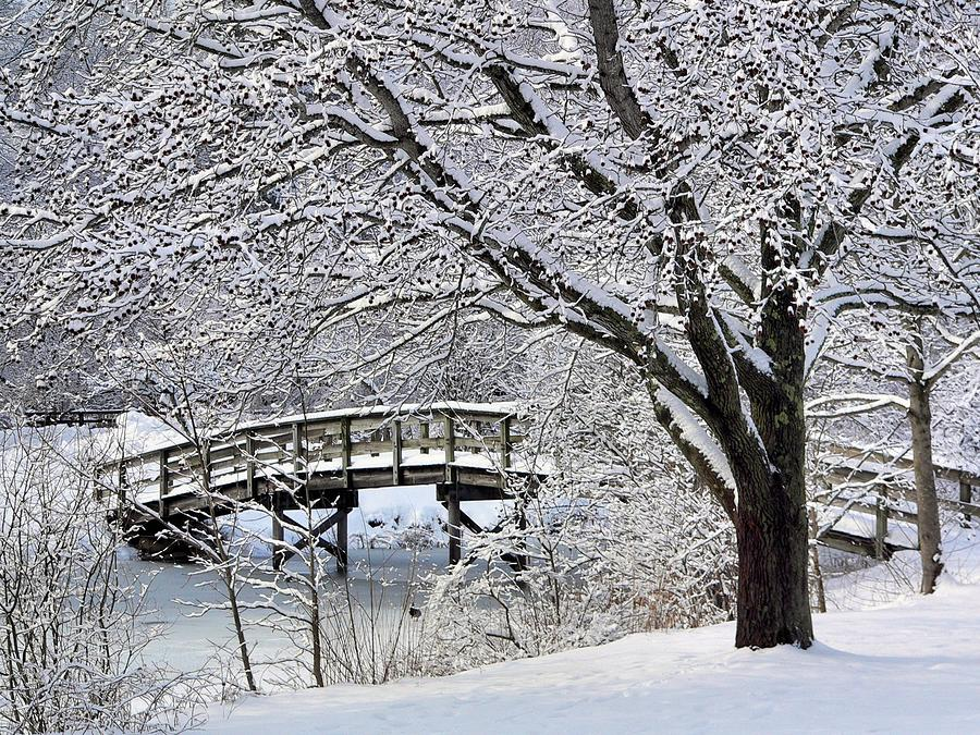 Bridge Photograph - Winter Wonderland by Janice Drew