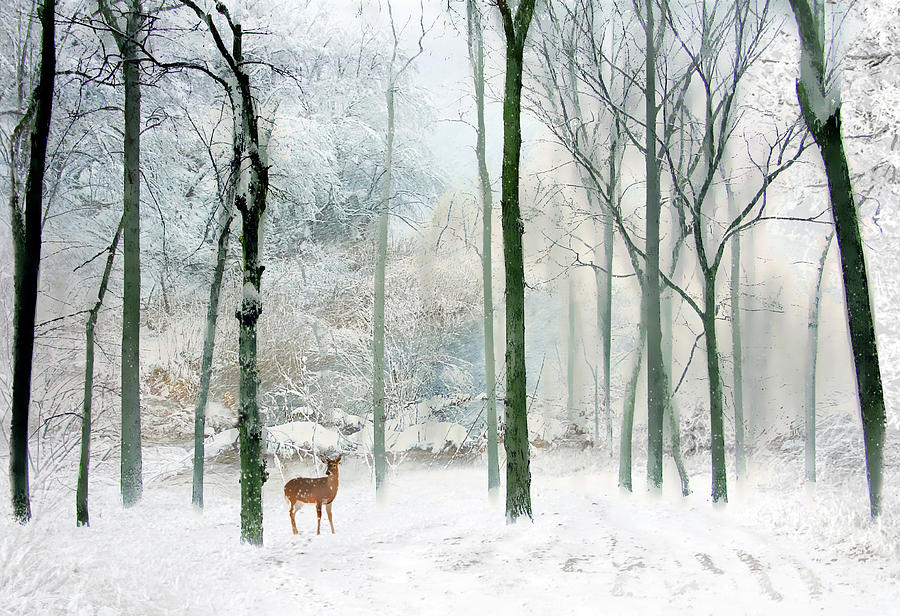 Winter Woodland is a photograph by Jessica Jenney which was uploaded ...