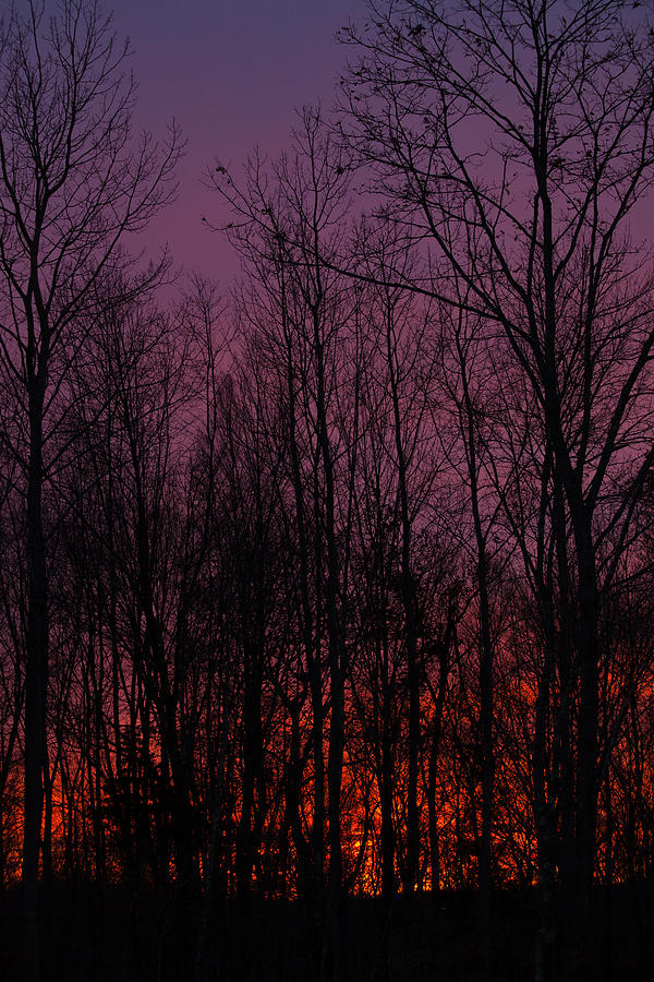 Winter Woods Sunset Photograph