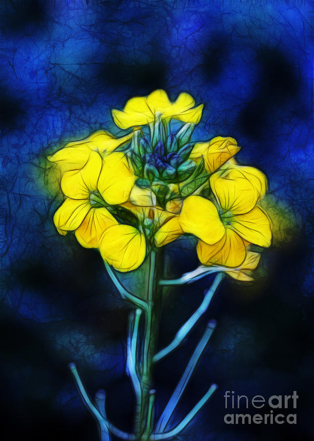 Wintercress Photograph  - Wintercress Fine Art Print