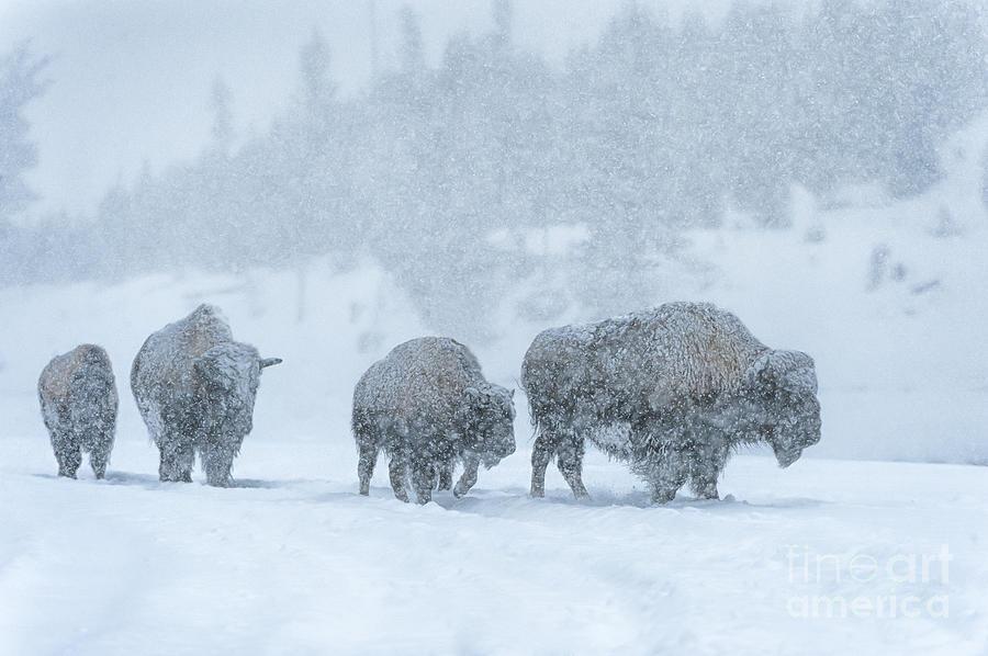 Winters Burden Photograph