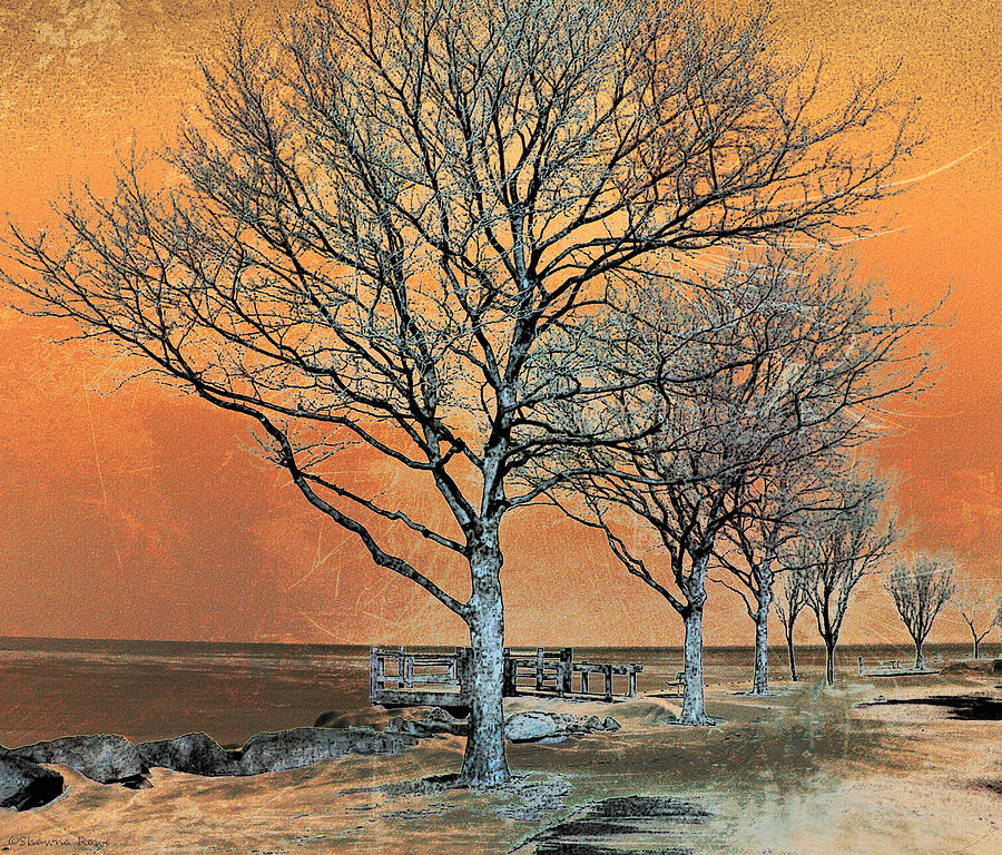 Winters Dawn Photograph  - Winters Dawn Fine Art Print