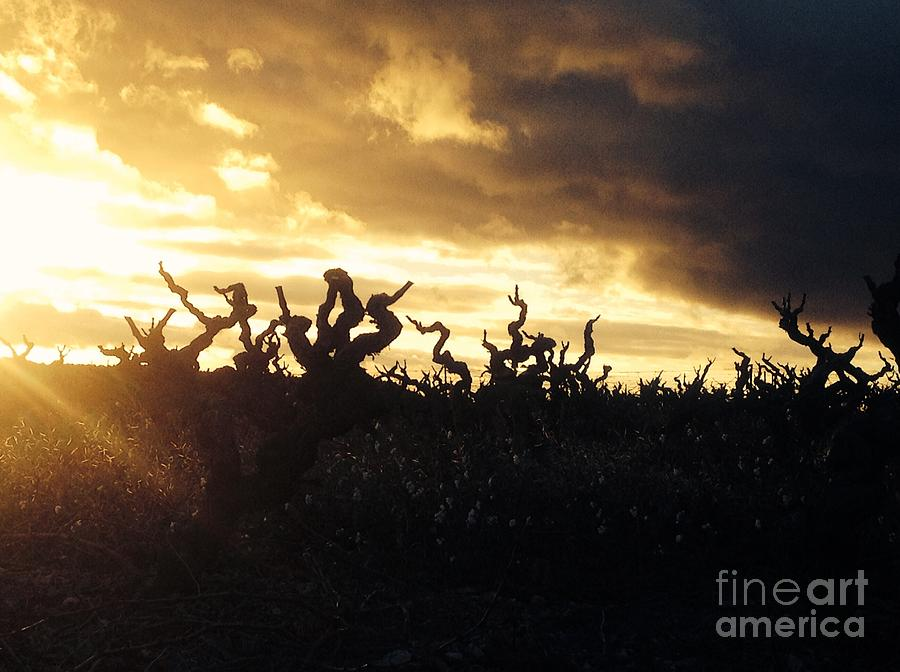Winters Eve In The Vineyard Photograph