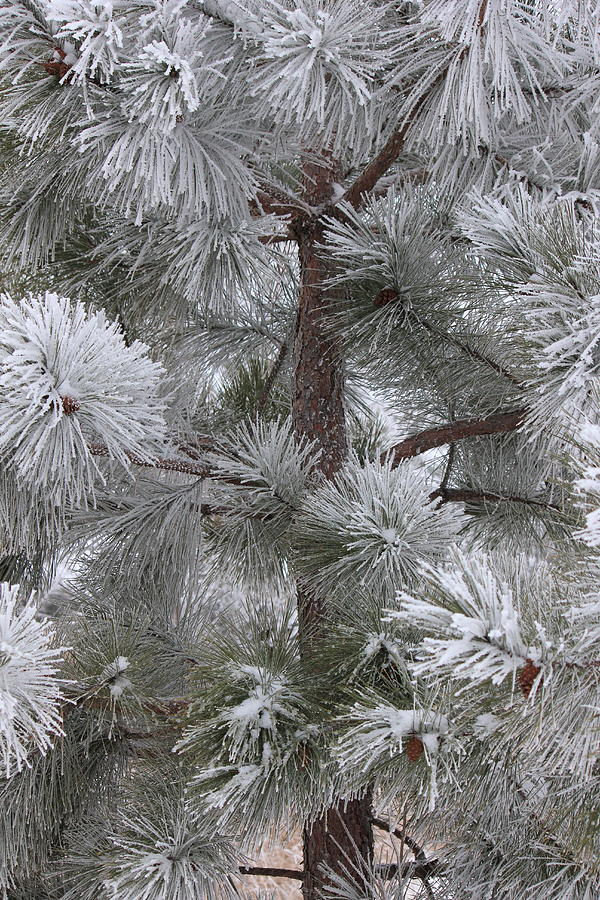 Winters Gift Photograph