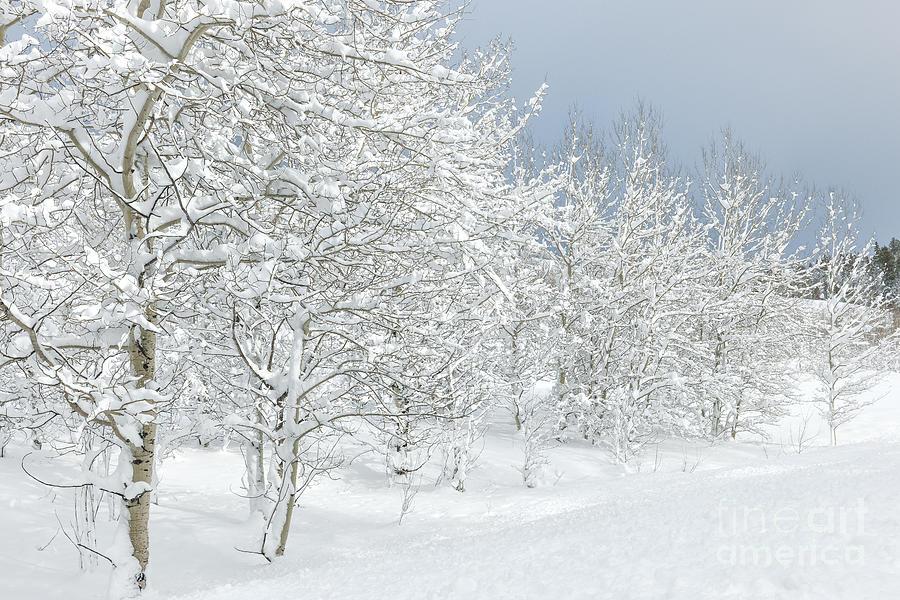 Winters Glory - Grand Tetons Photograph