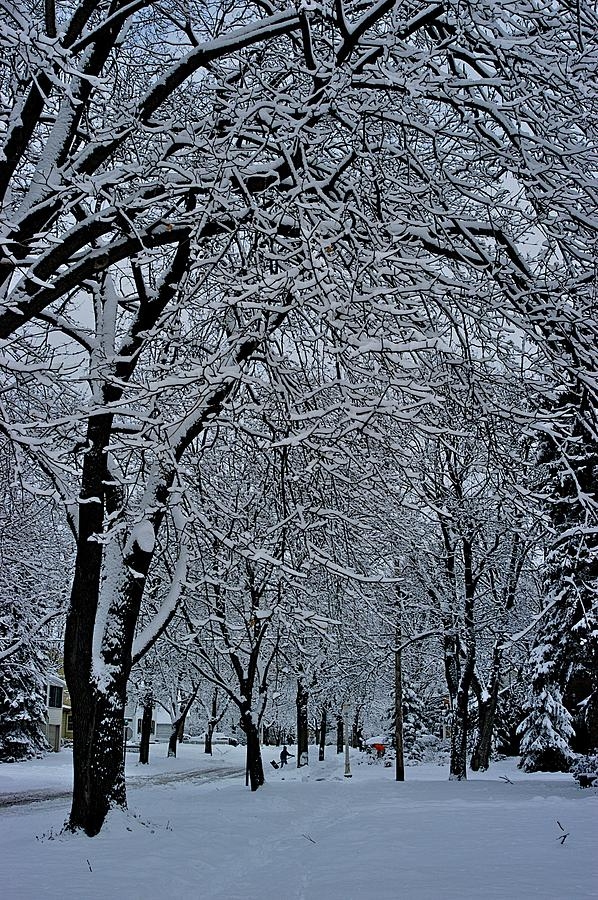 Winters Work Photograph  - Winters Work Fine Art Print