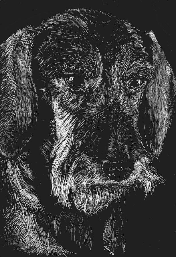 Dachshund Drawing - Wire Haired Dachshund by Rachel Hames