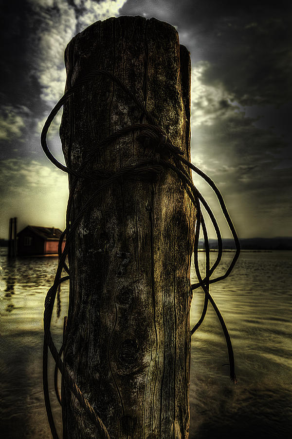 Wired  Photograph  - Wired  Fine Art Print