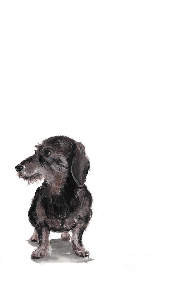 Wirehaired Dachshund - Rauhaardackel Painting  - Wirehaired Dachshund - Rauhaardackel Fine Art Print