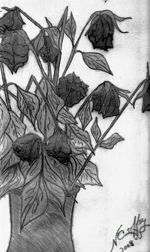 Withering Roses Drawing