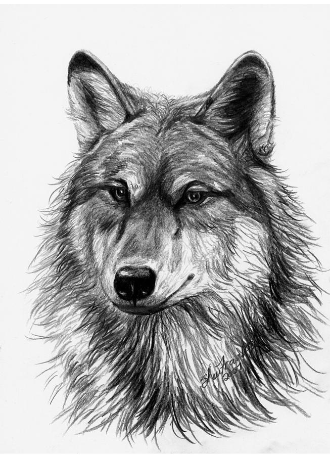 Wolf Head Sketch Art WeSharePics