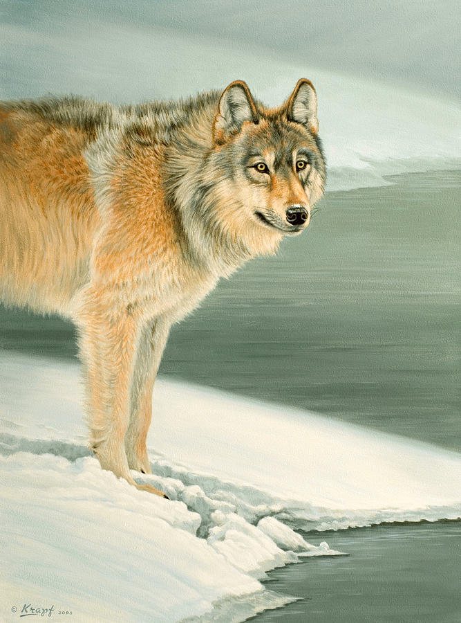 Wolf Portrait-lamar Valley  Painting