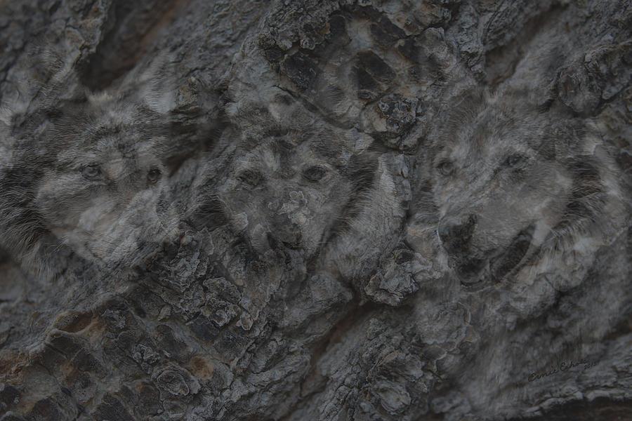 Wolf Digital Art - Wolf Shadows by Ernie Echols