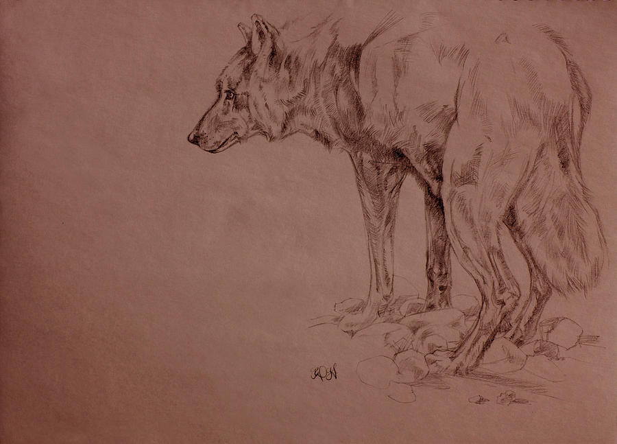 Wolf Sketch Drawing