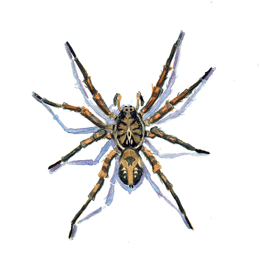Wolf Spider Painting