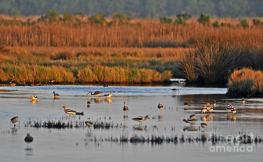 Wetland Photograph - Wonderful Wetlands by Al Powell Photography USA
