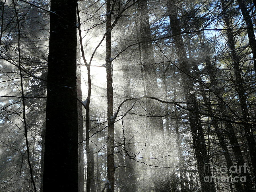 Wondrous Light Photograph  - Wondrous Light Fine Art Print
