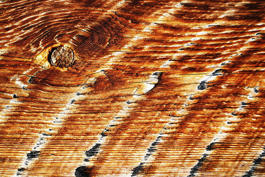 Wood Grain Photograph