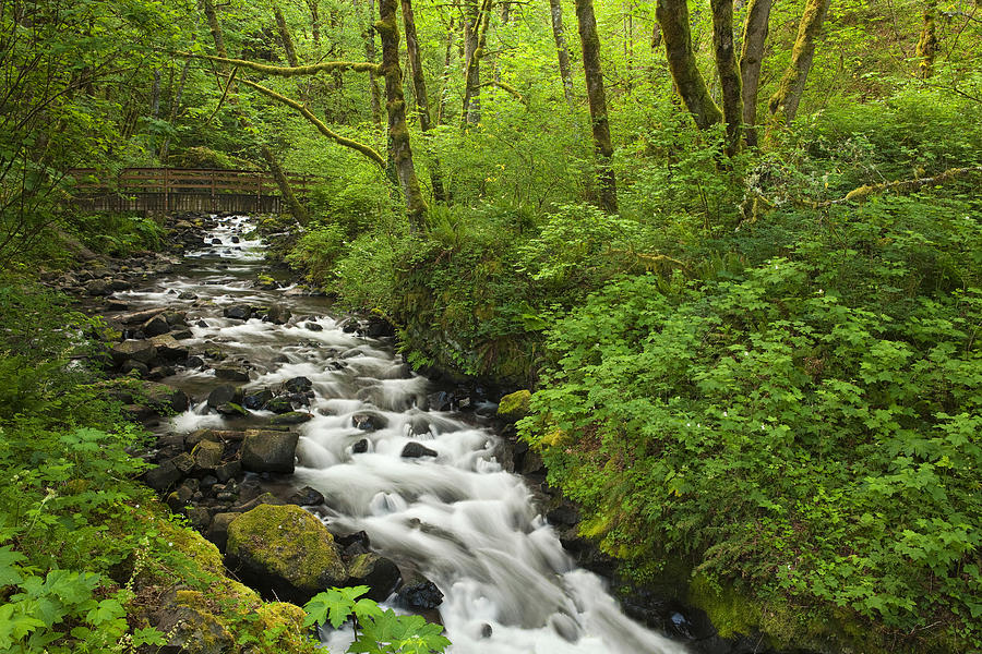 Wooded Stream In The Spring Photograph