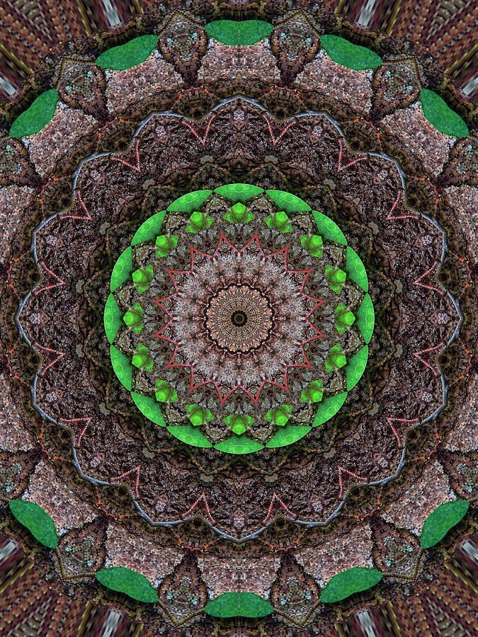 Woodland Morning 4 Digital Art