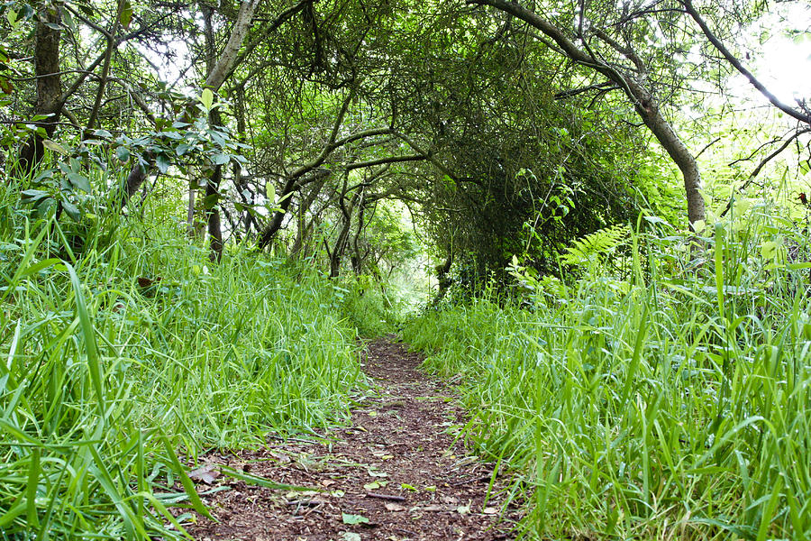 Woodland Pathway Photograph