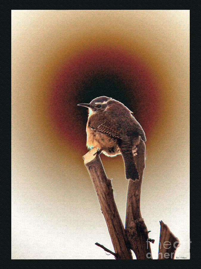 Wren At Sundown Digital Art
