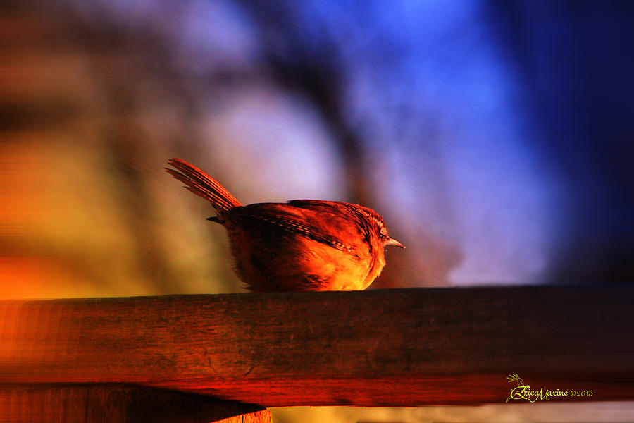 Bird Photograph - Wren In Early Mornings Light - Featured In In Newbies-nature Wildlife- Comfortable Art Groups by EricaMaxine  Price