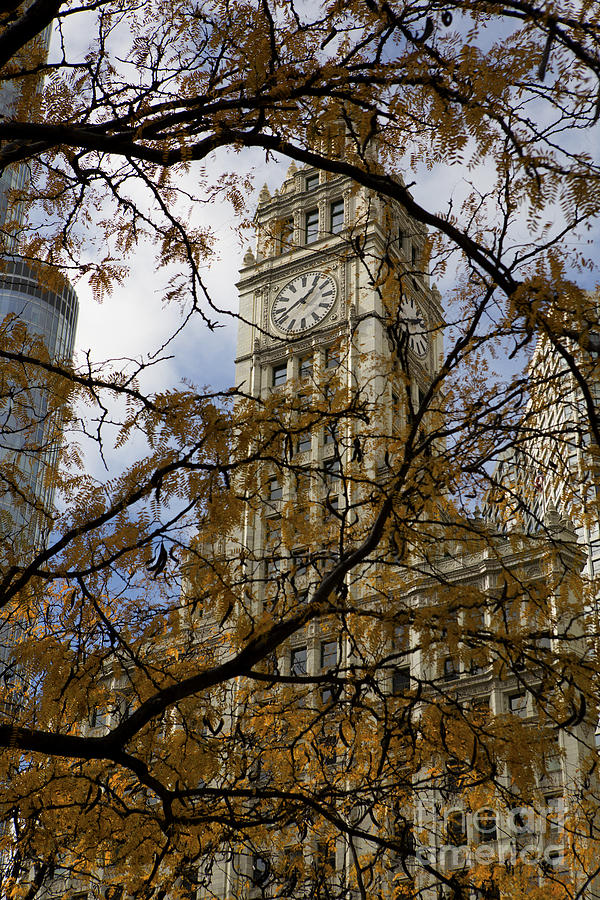 Wrigley Building In Autumn  Photograph  - Wrigley Building In Autumn  Fine Art Print