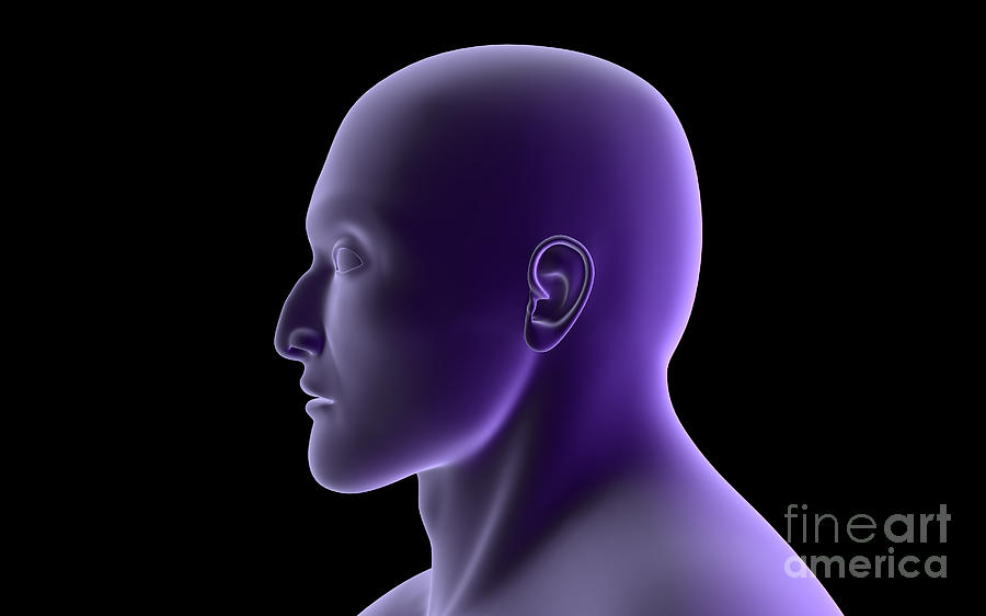 X-ray View Of Human Face, Profile View Digital Art