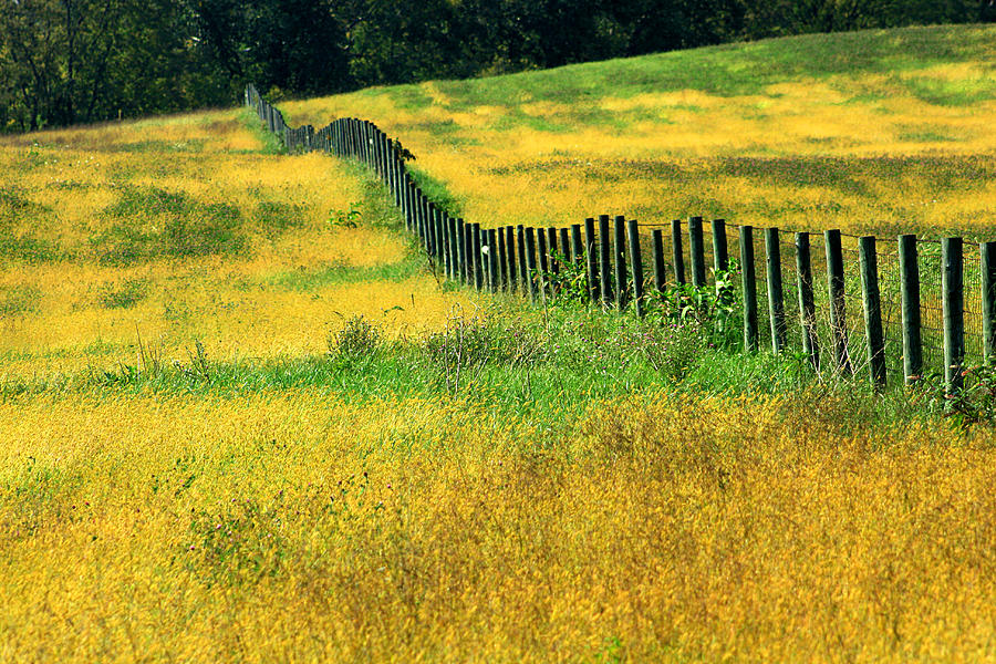 Yellow Afternoon Photograph