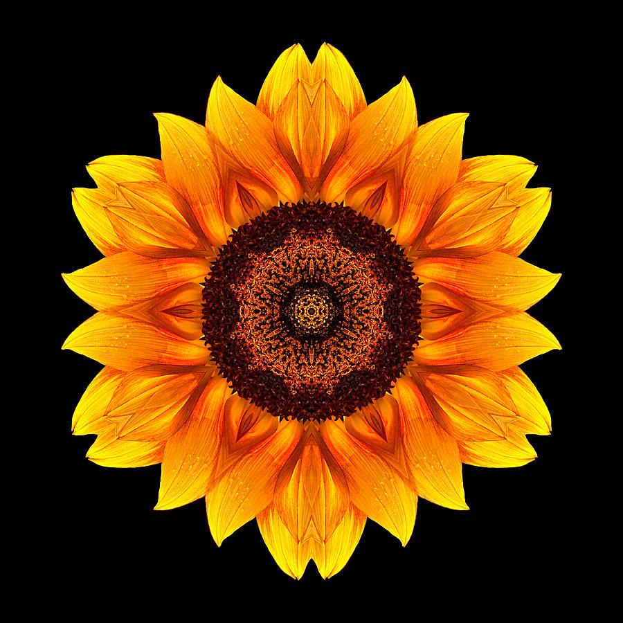 Yellow and orange sunflower vi flower mandala is a photograph by david