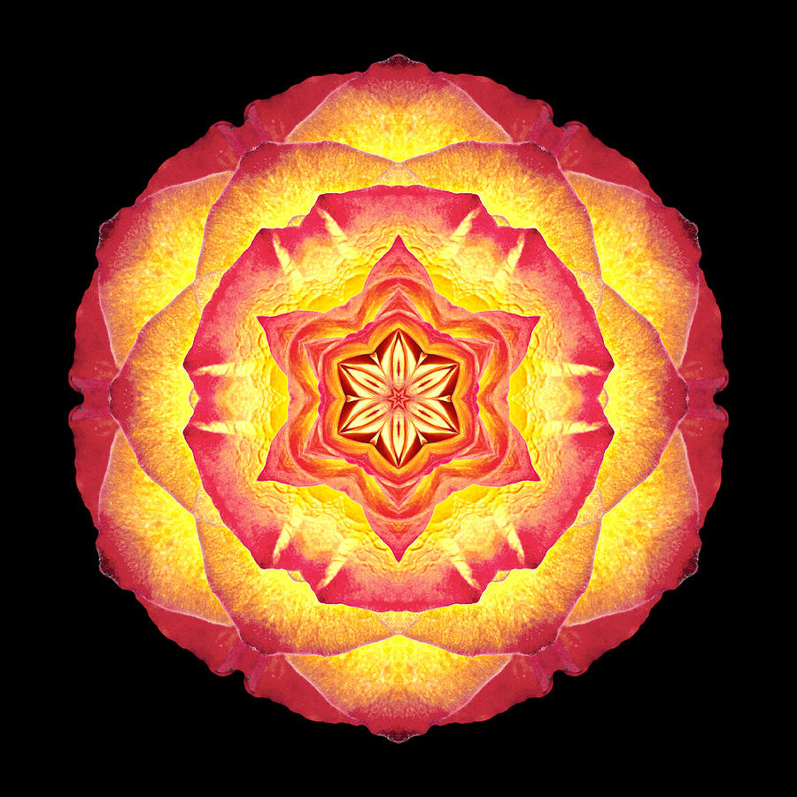 Yellow And Red Rose IIi Flower Mandala Photograph