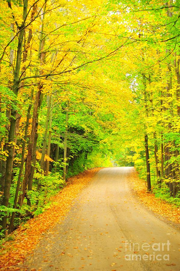 Yellow Autumn Road Photograph