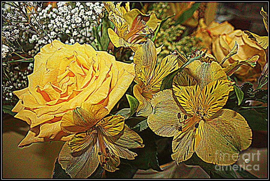 Yellow Blossoms Photograph