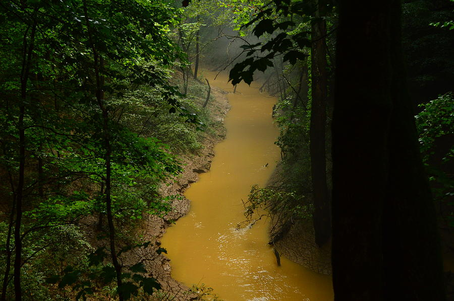 Yellow Cedar Sink Creek Photograph  - Yellow Cedar Sink Creek Fine Art Print