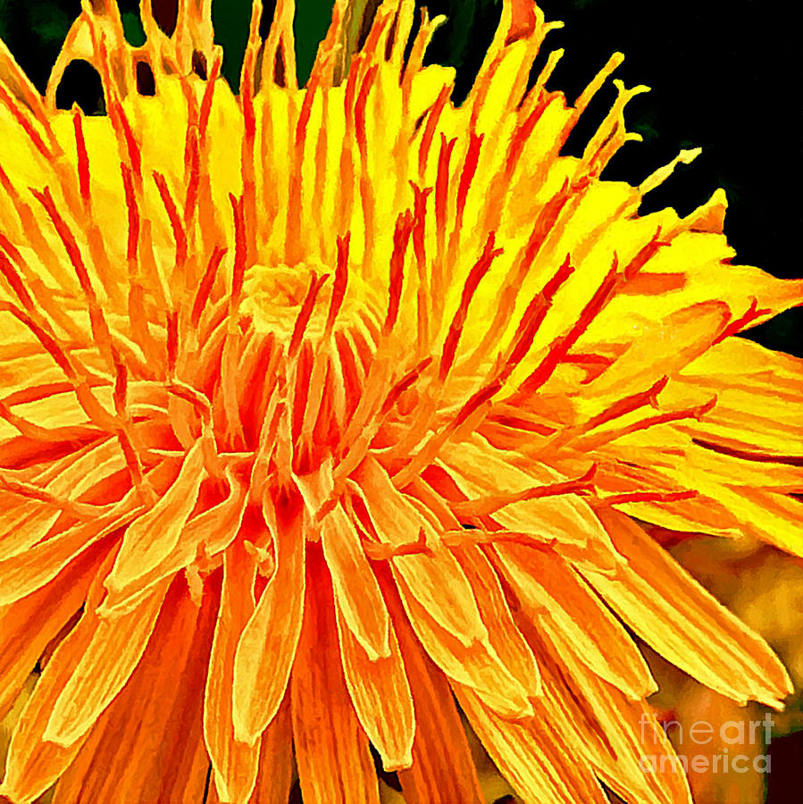 Yellow Chrysanthemum Painting Painting  - Yellow Chrysanthemum Painting Fine Art Print